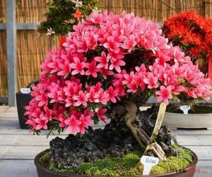 Một số loài hoa,cây cảnh tết được nhiều người ưa chuộng